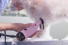 Chiuda sulla mano del tagliatore della disposizione della pelliccia dei peli di cane Fotografie Stock Libere da Diritti