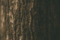 Chiuda sulla mostra della corteccia di un albero Fuoco selettivo fotografia stock libera da diritti