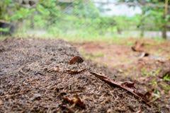 chiuda sulla natura di agricoltura biologica del fertilizzante del suolo Immagini Stock Libere da Diritti