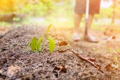 chiuda sulla natura di agricoltura biologica del fertilizzante del suolo Fotografie Stock