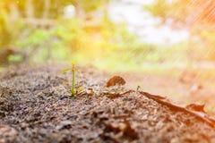 chiuda sulla natura di agricoltura biologica del fertilizzante del suolo Fotografie Stock Libere da Diritti