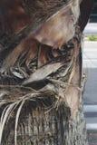 Chiuda sulla palma sulla strada Fotografia Stock Libera da Diritti