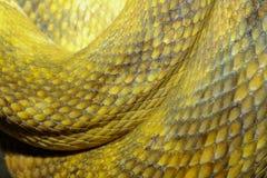 chiuda sulla pelle di serpente Moluccan del pitone immagini stock