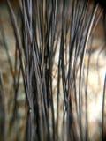 Chiuda sulla pianta nera del bastone per fondo Immagine Stock