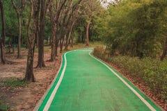 Chiuda sulla pista ciclabile verde vuota fiancheggiata con gli alberi verdi nel parco Fotografia Stock