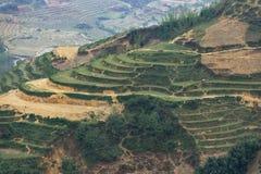 Chiuda sulla scala a libretto piantata sulla collina nel crepuscolo nel PA del Sa, Vietnam Immagini Stock Libere da Diritti