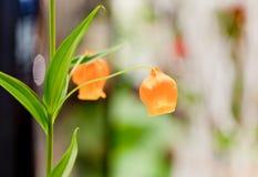 Chiuda sulla vista del fiore rosso-arancione Fotografia Stock Libera da Diritti