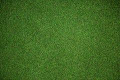 Chiuda sulla vista del tappeto erboso di astro Fotografie Stock