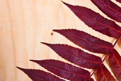 Chiuda sulla vista della foglia rossa di autunno su fondo di legno Fotografia Stock
