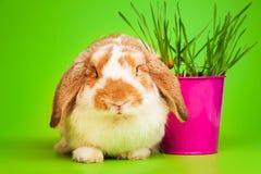 Chiuda sulla vista della molla del coniglietto sveglio con il vaso rosa Immagini Stock