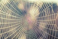 Chiuda sulla vista delle serie di web di ragni Ragnatela con la c Fotografia Stock Libera da Diritti