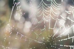 Chiuda sulla vista delle serie di web di ragni Ragnatela con la c Fotografie Stock Libere da Diritti