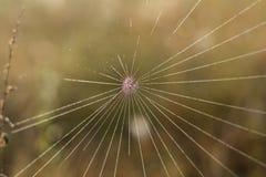 Chiuda sulla vista delle serie di web di ragni Ragnatela con la c Immagine Stock Libera da Diritti