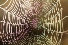 Chiuda sulla vista delle serie di web di ragni Ragnatela con la c Fotografia Stock