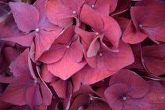 Chiuda sulla vista di crescita di fiori rosa/porpora in un giardino fotografia stock