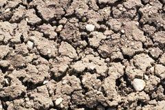 Chiuda sulla vista di suolo asciutto fertile strutturato incrinato in giardino Fotografie Stock