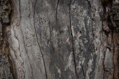 Chiuda sulla vista di vecchio fondo di legno di struttura Fotografia Stock Libera da Diritti