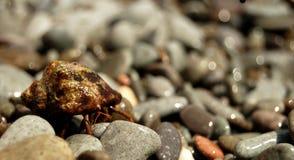 Chiuda sulla vista sul granchio di eremita sui ciottoli del mare Immagini Stock