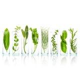 Chiuda sulle bottiglie delle erbe aromatiche Salvia, rosmarino, basi dolce Fotografia Stock Libera da Diritti