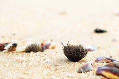Chiuda sulle coperture e sul corallo sulla spiaggia fotografia stock