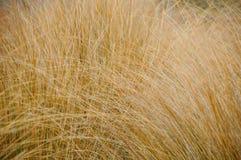Chiuda sulle erbe secche in foresta, fondo astratto della natura Fotografia Stock