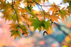 Chiuda sulle foglie gialle Fotografia Stock Libera da Diritti