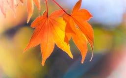 Chiuda sulle foglie gialle Fotografie Stock Libere da Diritti