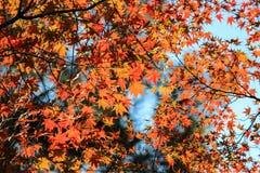 Chiuda sulle foglie variopinte con il fondo del cielo Immagini Stock Libere da Diritti