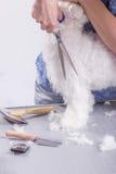 Chiuda sulle forbici che tagliano la spazzola del pettine dei peli della pelliccia del cane Immagine Stock