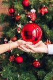 Chiuda sulle mani che tengono la palla di Natale sul fondo dell'albero di natale Immagine Stock Libera da Diritti