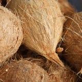 Chiuda sulle noci di cocco organiche al mercato locale. Profondità di campo bassa Immagini Stock Libere da Diritti