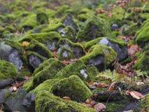 Chiuda sulle pietre del basalto ha riguardato il muschio verde e il boke caduto delle foglie immagini stock