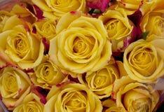 Chiuda sulle rose gialle Fotografie Stock Libere da Diritti