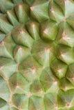 Chiuda sulle spine del durian Fotografie Stock