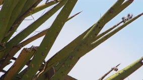 Chiuda sulle spine dorsali che coprono quasi ogni pianta in deserto fotografia stock libera da diritti