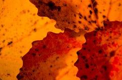 Chiuda sulle strutture delle foglie di autunno fotografie stock