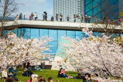 Chiune Sugihara Sakura Park à Vilnius Image stock
