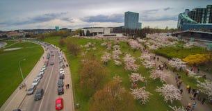Chiune Sugihara sakura park in Vilnius Royalty Free Stock Photos