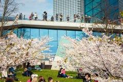 Chiune Sugihara Sakura park w Vilnius Obraz Stock