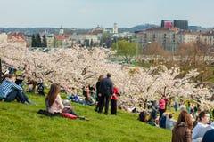 Chiune Sugihara Sakura park w Vilnius Zdjęcia Royalty Free