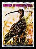 Chiurlo piccolo (phaeopus) del Numenius, serie asiatico degli uccelli, circa 1976 Fotografie Stock