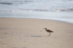 Chiurlo piccolo sulla spiaggia Fotografia Stock