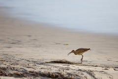 Chiurlo piccolo sulla spiaggia Fotografie Stock