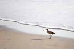 Chiurlo piccolo sulla spiaggia Fotografia Stock Libera da Diritti