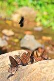 Chiuso su della farfalla Immagine Stock Libera da Diritti