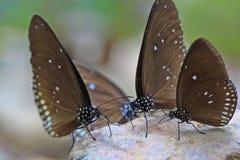 Chiuso su della farfalla Immagine Stock