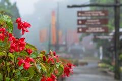 Chiuso su di bei fiori a Mae Fah Luang Fotografia Stock Libera da Diritti
