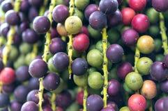 Chiuso su sulla frutta della palma immagini stock libere da diritti