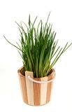 Chive. Green chive in a basket Royalty Free Stock Photo