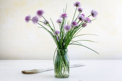 Chive in blossom Stock Images
